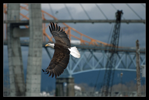 Urban Eagle by Michaelaw